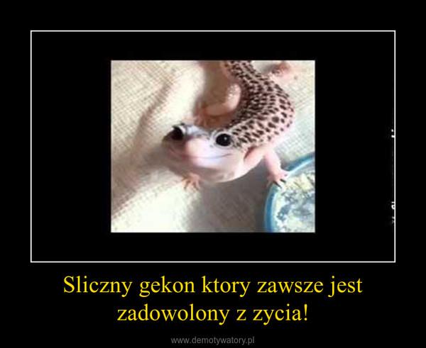 Sliczny gekon ktory zawsze jest zadowolony z zycia! –