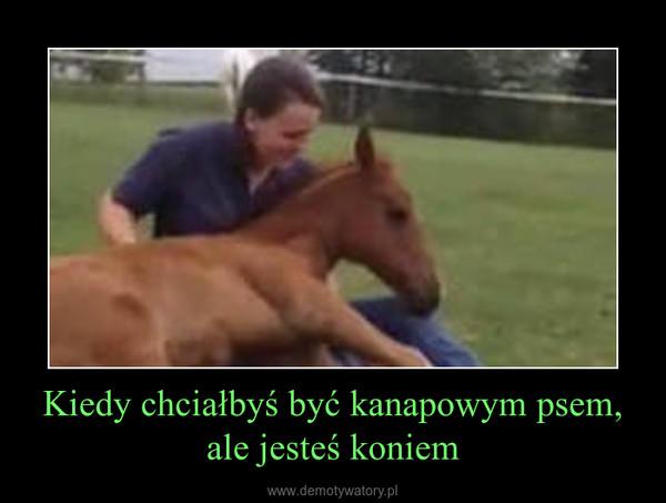 Kiedy chciałbyś być kanapowym psem, ale jesteś koniem –