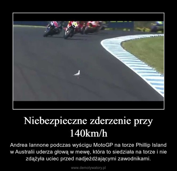 Niebezpieczne zderzenie przy 140km/h – Andrea Iannone podczas wyścigu MotoGP na torze Phillip Island w Australii uderza głową w mewę, która to siedziała na torze i nie zdążyła uciec przed nadjeżdżającymi zawodnikami.