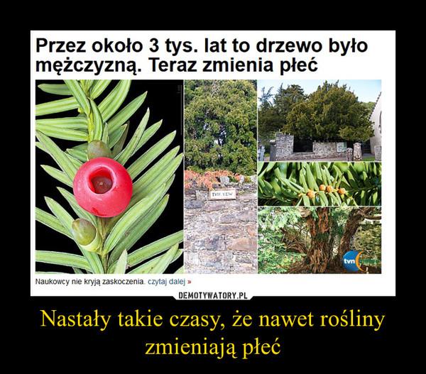 Nastały takie czasy, że nawet rośliny zmieniają płeć –