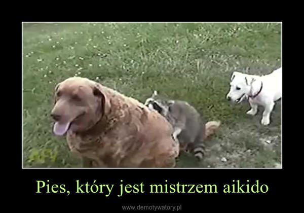 Pies, który jest mistrzem aikido –