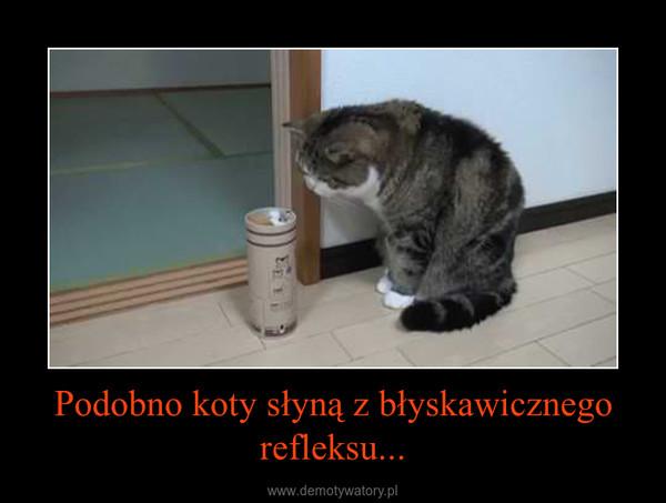 Podobno koty słyną z błyskawicznego refleksu... –
