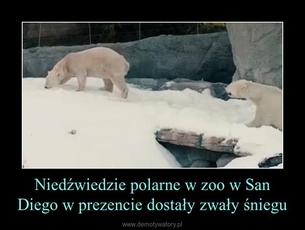 Niedźwiedzie polarne w zoo w San Diego w prezencie dostały zwały śniegu –