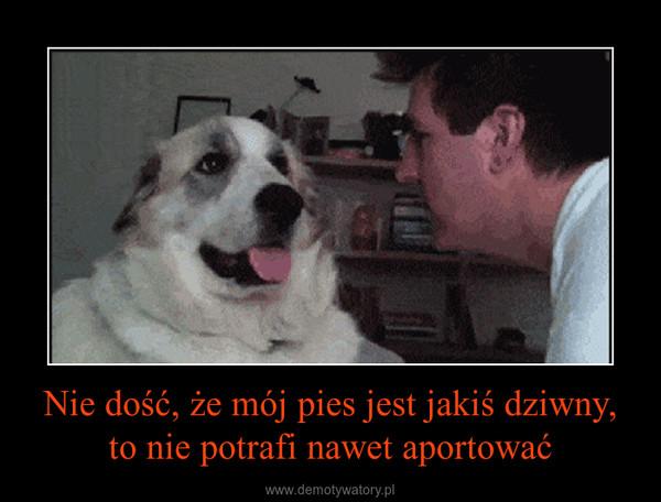 Nie dość, że mój pies jest jakiś dziwny, to nie potrafi nawet aportować –