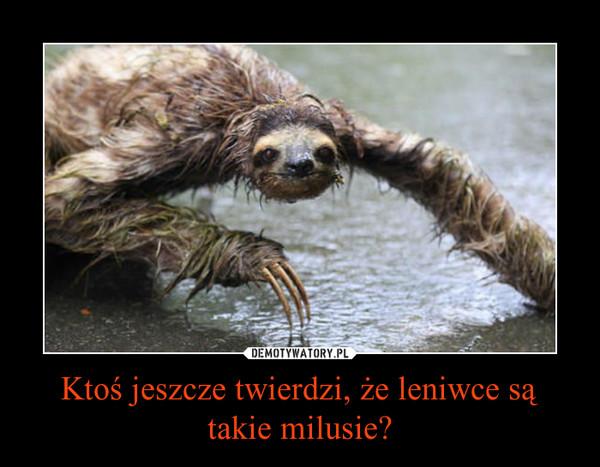 Ktoś jeszcze twierdzi, że leniwce są takie milusie? –
