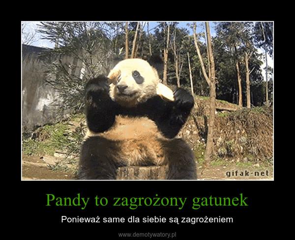 Pandy to zagrożony gatunek – Ponieważ same dla siebie są zagrożeniem