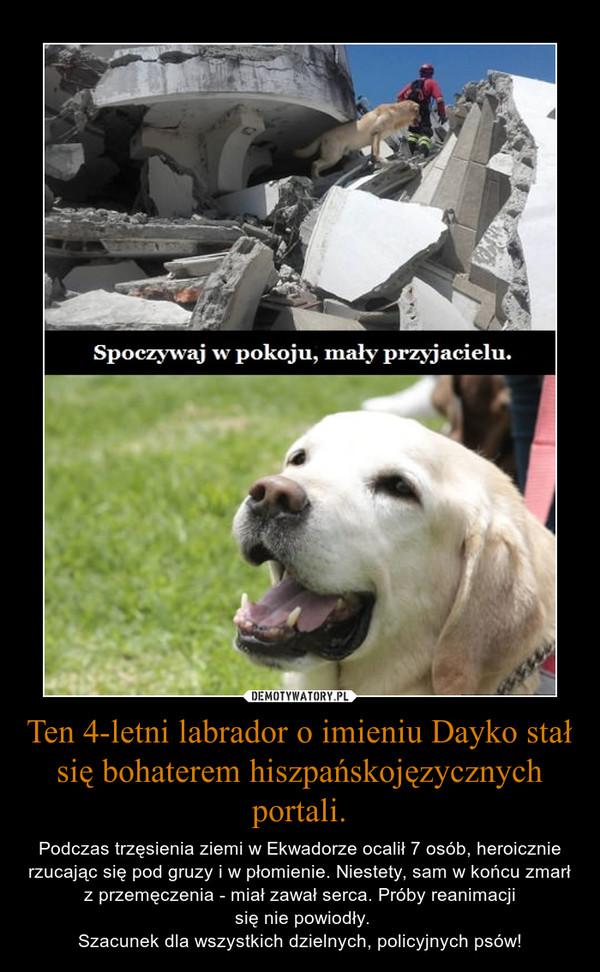 Ten 4-letni labrador o imieniu Dayko stał się bohaterem hiszpańskojęzycznych portali. – Podczas trzęsienia ziemi w Ekwadorze ocalił 7 osób, heroicznie rzucając się pod gruzy i w płomienie. Niestety, sam w końcu zmarł z przemęczenia - miał zawał serca. Próby reanimacji się nie powiodły.Szacunek dla wszystkich dzielnych, policyjnych psów!