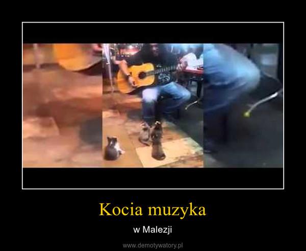 Kocia muzyka – w Malezji