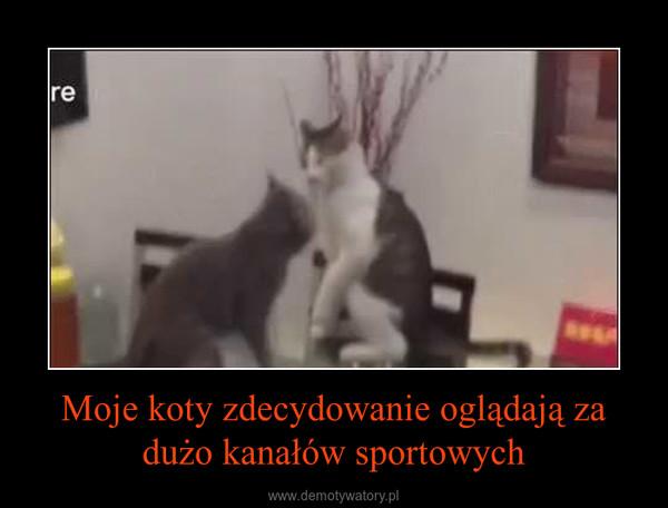 Moje koty zdecydowanie oglądają za dużo kanałów sportowych –