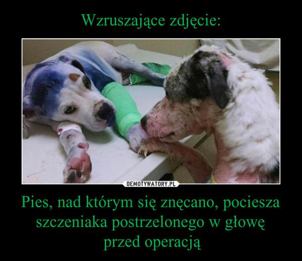 Pies, nad którym się znęcano, pociesza szczeniaka postrzelonego w głowę przed operacją –