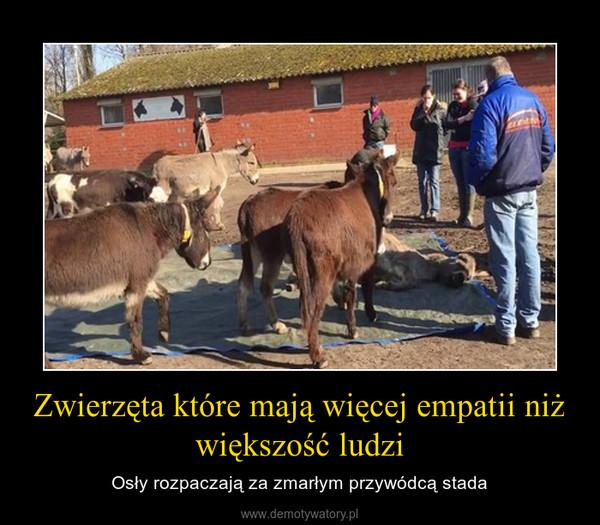 Zwierzęta które mają więcej empatii niż większość ludzi – Osły rozpaczają za zmarłym przywódcą stada