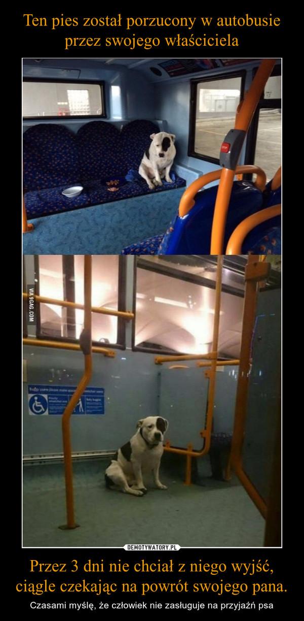 Przez 3 dni nie chciał z niego wyjść, ciągle czekając na powrót swojego pana. – Czasami myślę, że człowiek nie zasługuje na przyjaźń psa