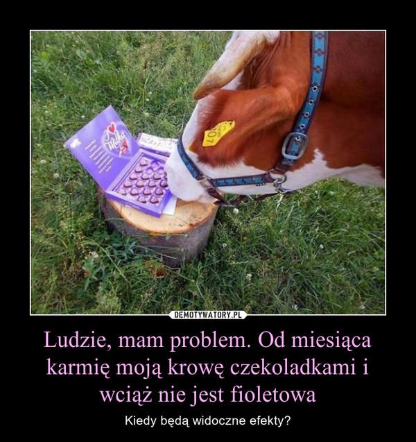 Ludzie, mam problem. Od miesiąca karmię moją krowę czekoladkami i wciąż nie jest fioletowa – Kiedy będą widoczne efekty?