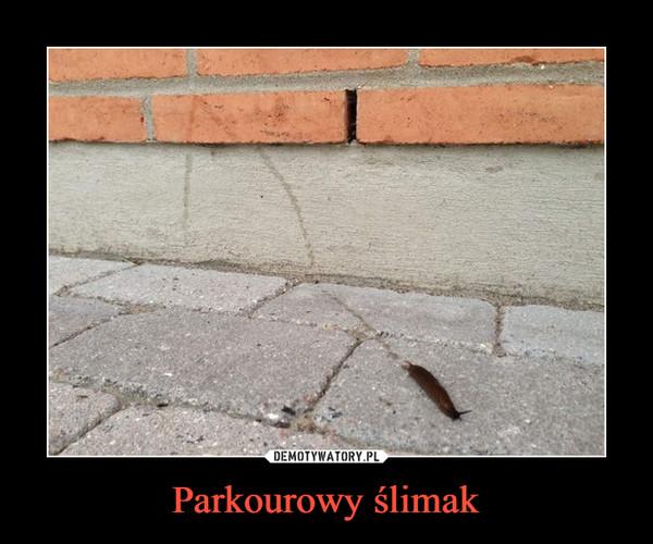 Parkourowy ślimak –