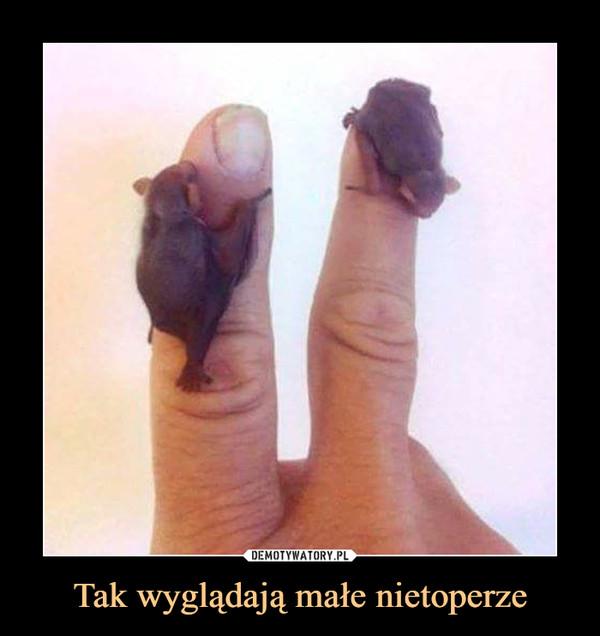 Tak wyglądają małe nietoperze –