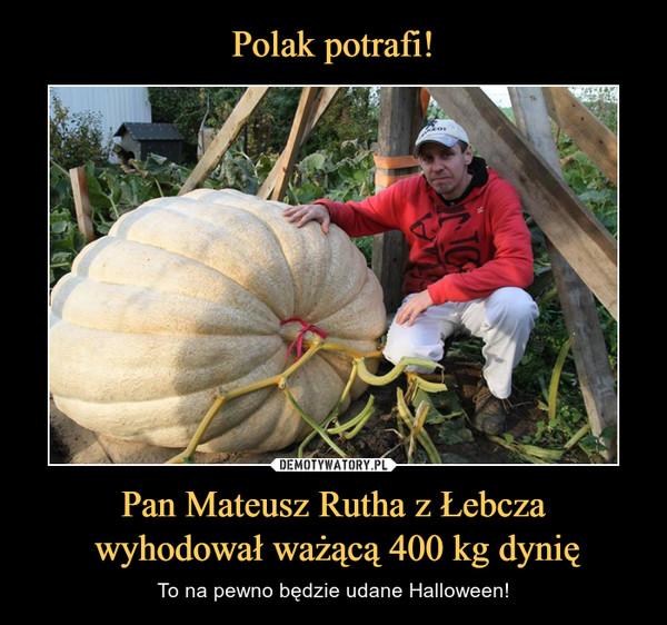 Pan Mateusz Rutha z Łebcza wyhodował ważącą 400 kg dynię – To na pewno będzie udane Halloween!