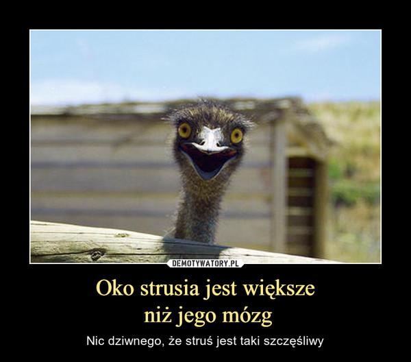 Oko strusia jest większe niż jego mózg – Nic dziwnego, że struś jest taki szczęśliwy