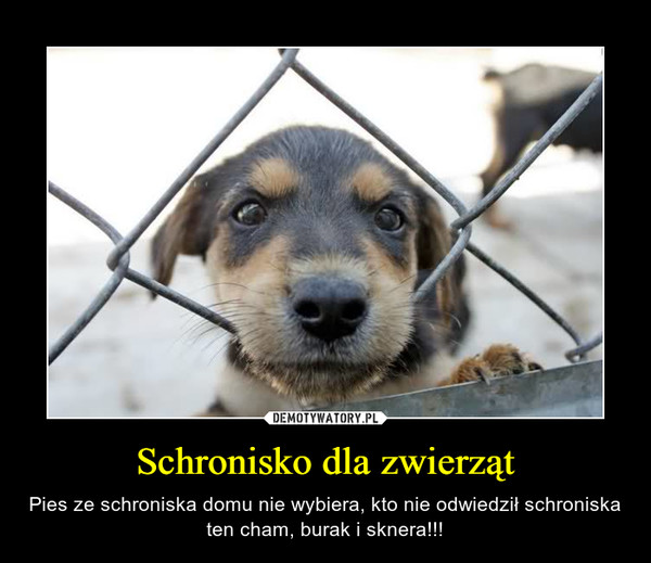 Schronisko dla zwierząt – Pies ze schroniska domu nie wybiera, kto nie odwiedził schroniska ten cham, burak i sknera!!!