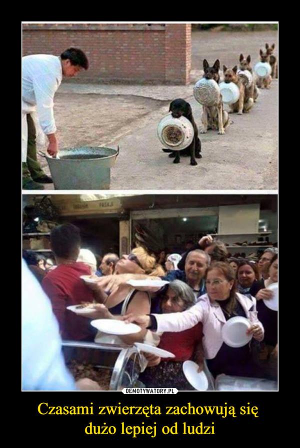 Czasami zwierzęta zachowują się dużo lepiej od ludzi –
