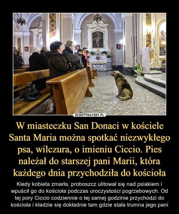 W miasteczku San Donaci w kościele Santa Maria można spotkać niezwykłego psa, wilczura, o imieniu Ciccio. Pies należał do starszej pani Marii, która każdego dnia przychodziła do kościoła – Kiedy kobieta zmarła, proboszcz ulitował się nad psiakiem i wpuścił go do kościoła podczas uroczystości pogrzebowych. Od tej pory Ciccio codziennie o tej samej godzinie przychodzi do kościoła i kładzie się dokładnie tam gdzie stała trumna jego pani