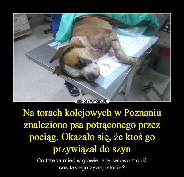 Na torach kolejowych w Poznaniu znaleziono psa potrąconego przez pociąg. Okazało się, że ktoś go przywiązał do szyn – Co trzeba mieć w głowie, aby celowo zrobićcoś takiego żywej istocie?