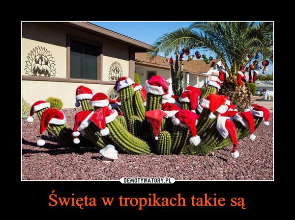 Święta w tropikach takie są –