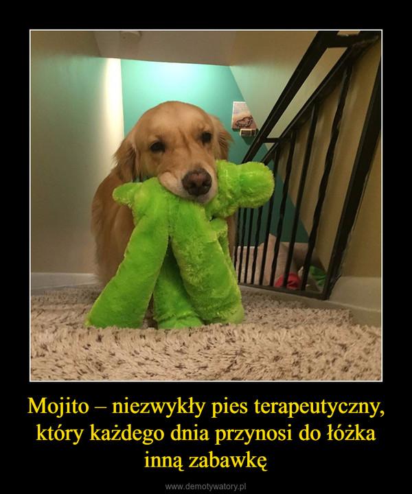 Mojito – niezwykły pies terapeutyczny, który każdego dnia przynosi do łóżka inną zabawkę –