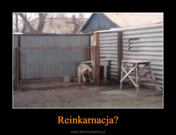 Reinkarnacja? –