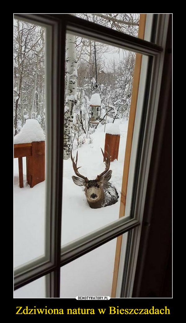 Zdziwiona natura w Bieszczadach –