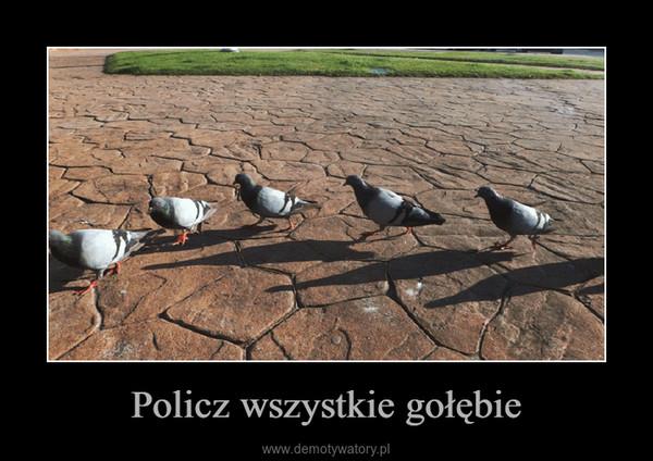Policz wszystkie gołębie –