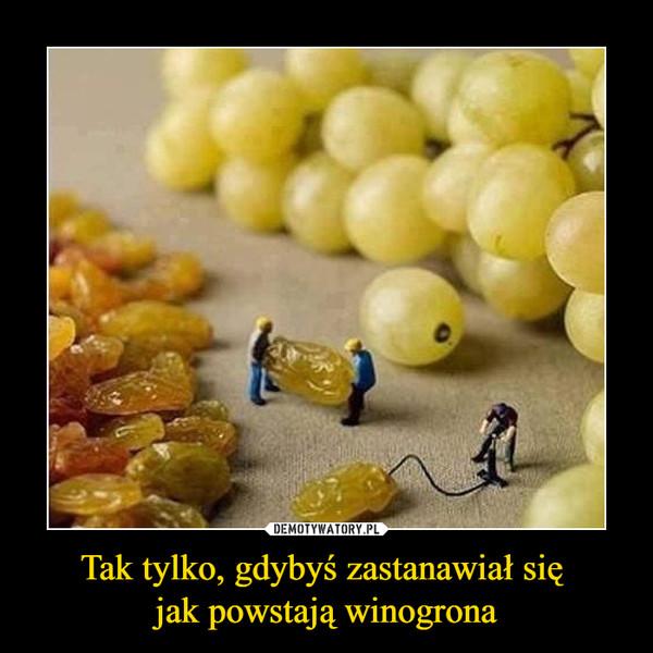 Tak tylko, gdybyś zastanawiał się jak powstają winogrona –