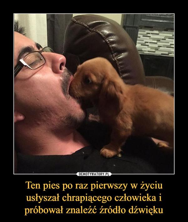 Ten pies po raz pierwszy w życiu usłyszał chrapiącego człowieka i próbował znaleźć źródło dźwięku –