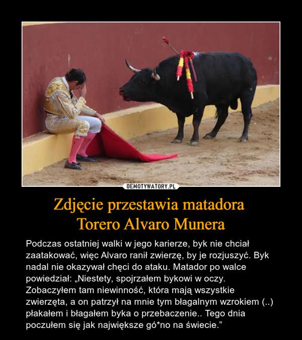 """Zdjęcie przestawia matadora Torero Alvaro Munera – Podczas ostatniej walki w jego karierze, byk nie chciał zaatakować, więc Alvaro ranił zwierzę, by je rozjuszyć. Byk nadal nie okazywał chęci do ataku. Matador po walce powiedział: """"Niestety, spojrzałem bykowi w oczy. Zobaczyłem tam niewinność, która mają wszystkie zwierzęta, a on patrzył na mnie tym błagalnym wzrokiem (..) płakałem i błagałem byka o przebaczenie.. Tego dnia poczułem się jak największe gó*no na świecie."""""""