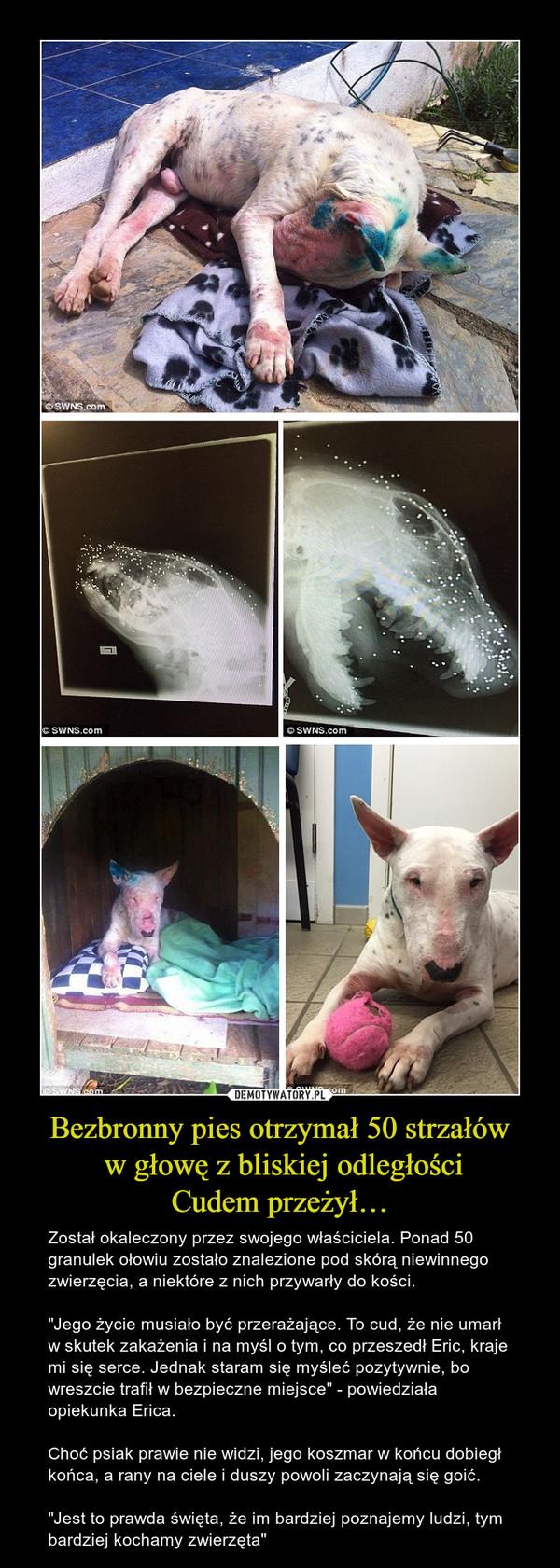 """Bezbronny pies otrzymał 50 strzałów w głowę z bliskiej odległościCudem przeżył… – Został okaleczony przez swojego właściciela. Ponad 50 granulek ołowiu zostało znalezione pod skórą niewinnego zwierzęcia, a niektóre z nich przywarły do kości.""""Jego życie musiało być przerażające. To cud, że nie umarł w skutek zakażenia i na myśl o tym, co przeszedł Eric, kraje mi się serce. Jednak staram się myśleć pozytywnie, bo wreszcie trafił w bezpieczne miejsce"""" - powiedziała opiekunka Erica.Choć psiak prawie nie widzi, jego koszmar w końcu dobiegł końca, a rany na ciele i duszy powoli zaczynają się goić.""""Jest to prawda święta, że im bardziej poznajemy ludzi, tym bardziej kochamy zwierzęta"""""""