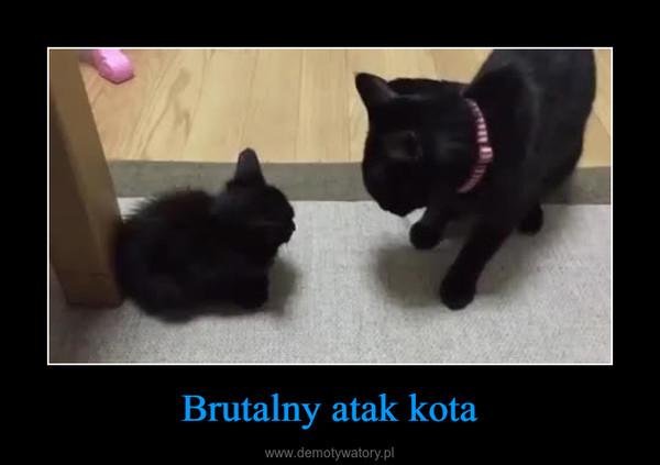 Brutalny atak kota –