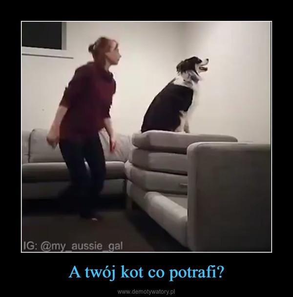 A twój kot co potrafi? –