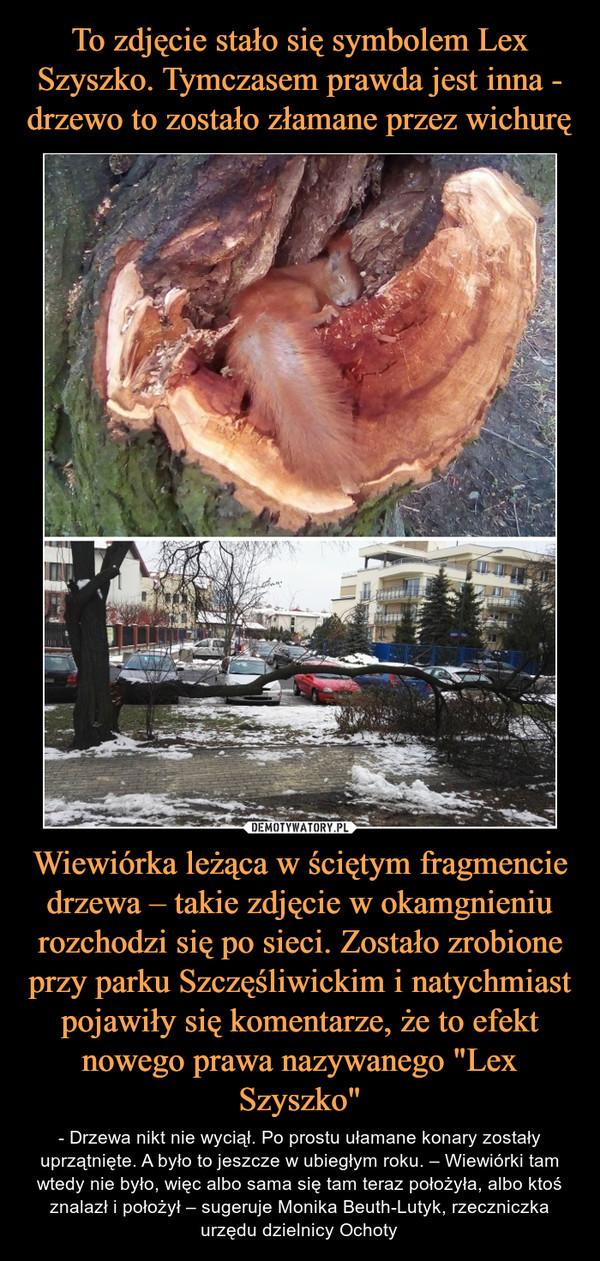 """Wiewiórka leżąca w ściętym fragmencie drzewa – takie zdjęcie w okamgnieniu rozchodzi się po sieci. Zostało zrobione przy parku Szczęśliwickim i natychmiast pojawiły się komentarze, że to efekt nowego prawa nazywanego """"Lex Szyszko"""" – - Drzewa nikt nie wyciął. Po prostu ułamane konary zostały uprzątnięte. A było to jeszcze w ubiegłym roku. – Wiewiórki tam wtedy nie było, więc albo sama się tam teraz położyła, albo ktoś znalazł i położył – sugeruje Monika Beuth-Lutyk, rzeczniczka urzędu dzielnicy Ochoty"""