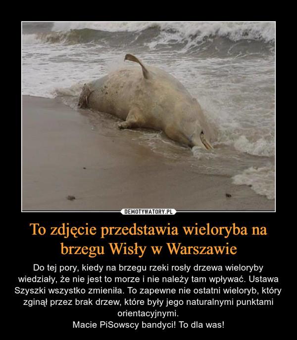 To zdjęcie przedstawia wieloryba na brzegu Wisły w Warszawie – Do tej pory, kiedy na brzegu rzeki rosły drzewa wieloryby wiedziały, że nie jest to morze i nie należy tam wpływać. Ustawa Szyszki wszystko zmieniła. To zapewne nie ostatni wieloryb, który zginął przez brak drzew, które były jego naturalnymi punktami orientacyjnymi.Macie PiSowscy bandyci! To dla was!