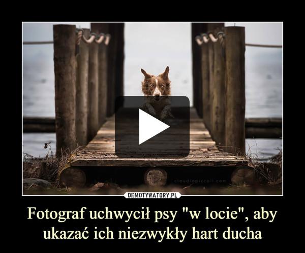 """Fotograf uchwycił psy """"w locie"""", aby ukazać ich niezwykły hart ducha –"""