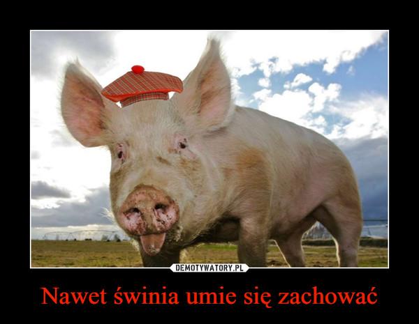 Nawet świnia umie się zachować –