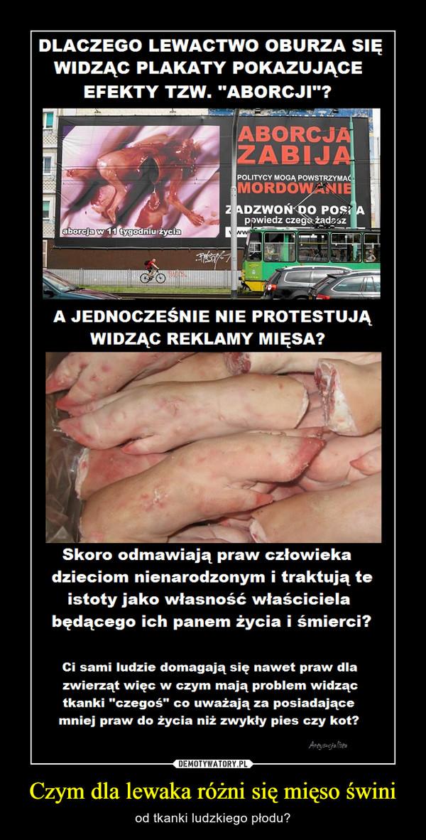 Czym dla lewaka różni się mięso świni – od tkanki ludzkiego płodu?