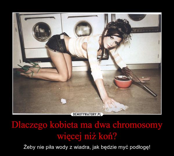 Dlaczego kobieta ma dwa chromosomy więcej niż koń? – Żeby nie piła wody z wiadra, jak będzie myć podłogę!