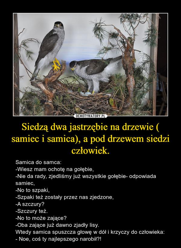 Siedzą dwa jastrzębie na drzewie ( samiec i samica), a pod drzewem siedzi człowiek. – Samica do samca:-Wiesz mam ochotę na gołębie,-Nie da rady, zjedliśmy już wszystkie gołębie- odpowiada samiec,-No to szpaki,-Szpaki też zostały przez nas zjedzone,-A szczury?-Szczury też.-No to może zające?-Oba zające już dawno zjadły lisy.Wtedy samica spuszcza głowę w dół i krzyczy do człowieka:- Noe, coś ty najlepszego narobił?!