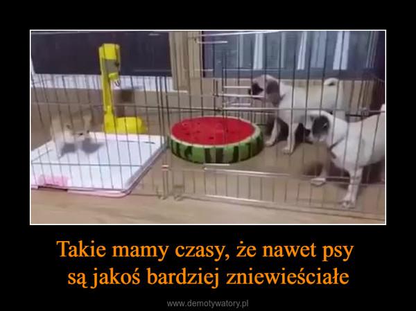 Takie mamy czasy, że nawet psy są jakoś bardziej zniewieściałe –