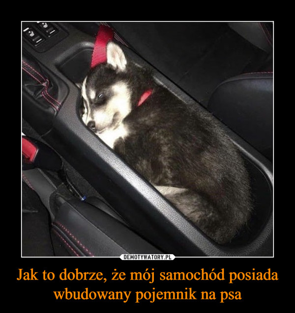 Jak to dobrze, że mój samochód posiada wbudowany pojemnik na psa –