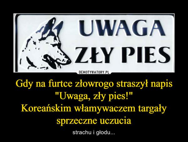 """Gdy na furtce złowrogo straszył napis """"Uwaga, zły pies!""""Koreańskim włamywaczem targały sprzeczne uczucia – strachu i głodu..."""