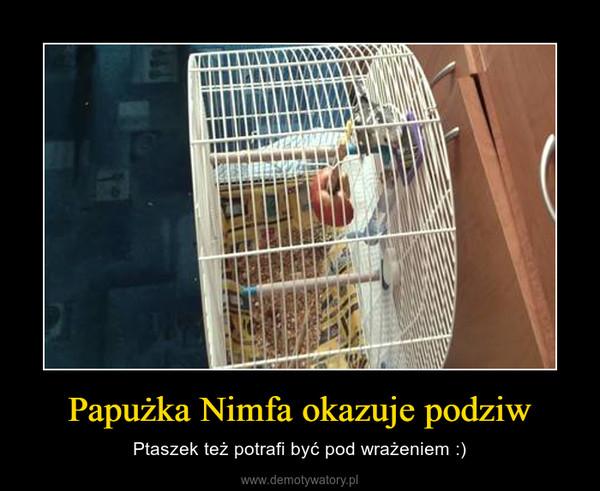 Papużka Nimfa okazuje podziw – Ptaszek też potrafi być pod wrażeniem :)