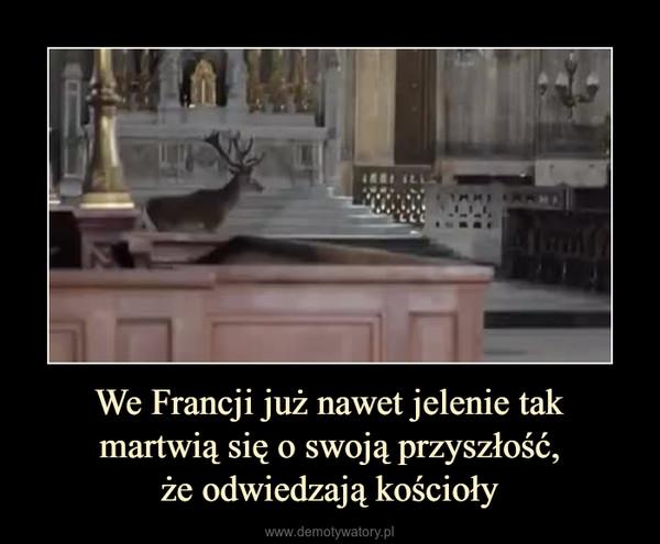 We Francji już nawet jelenie takmartwią się o swoją przyszłość,że odwiedzają kościoły –