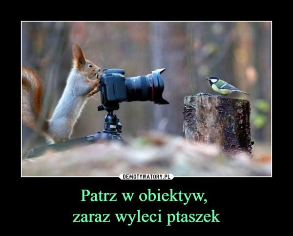 Patrz w obiektyw, zaraz wyleci ptaszek –