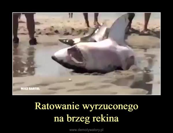 Ratowanie wyrzuconegona brzeg rekina –